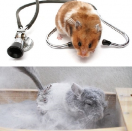 HEALTH & BATHING
